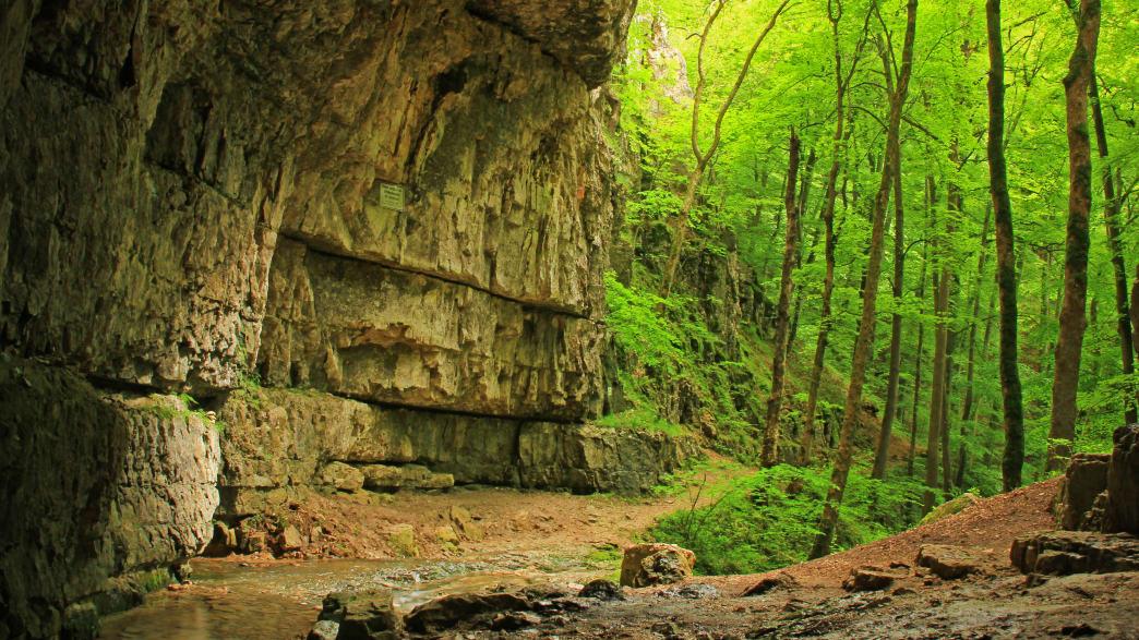 Ein großer Steinfelsen im Wald