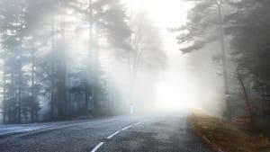 Landstraße im lichten Wald bei Nebel