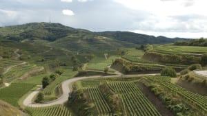 Blick über die Landschaft mit Weinbergen am Kaiserstuhl