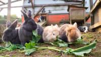 Die Kaninchen im Campingpark Bergisches Land bei Lindlar
