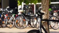 ein Fahrrad steht an einem Baum im Hintergrund sind verschwommen weitere Fahrräder zu erkennen