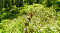 Eine Familie wandert auf dem Eildkatzenwanderweg den Berg hinunter