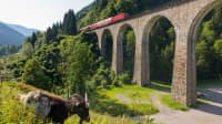 Eine Ziege frisst vor dem Ravennaviadukt im Schwarzwald