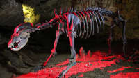 Beleuchtetes Skelett eine Höhlenbären in der Teufelshöhle Pottenstein
