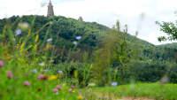 Blick über Wiese und Berg auf das Kyffhäuser Denkmal im Frühling