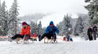 Schlittenfahren am Großen Arber mit Blick zum Skilift