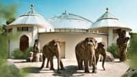 Elefanten vor dem Elefabntenhaus im Tierpark Hellabrunn