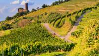 Landschaft mit Weinbergen und einer Burg