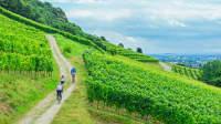 Fahrradfahrer auf einem Weg zwischen Weinstöcken