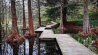Ein Holzsteg mit vielen Ecken führt über Wasser an Bäumen vorbei