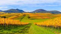 Eine schöne herbstliche Landschaft entlang der Deutschen Weinstrasse mit Blick auf die Weinberge