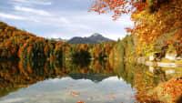 Herbstwald rund um einen See