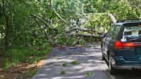 petrolfarbener Kombi vor einem umgestürzten Baum