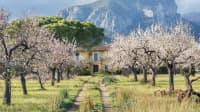 Mallorca zur Mandelblüte im Februar