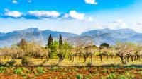 Frühlingslandschaft mit Feldern und Blühenden Bäumen vor einer Bergkulisse auf Mallorca
