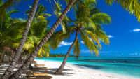 Ein Traumstrand mit Palmen und blauem Meer in der Dominikanischen Republik