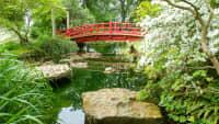 Brücke und Teich im Japanischen Garten in Leverkusen
