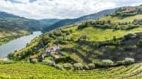 Landschaft des Douro-Flussgebiets in Portugal