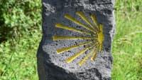 Gelbe Muschel des Jakobsweg an einem Stein