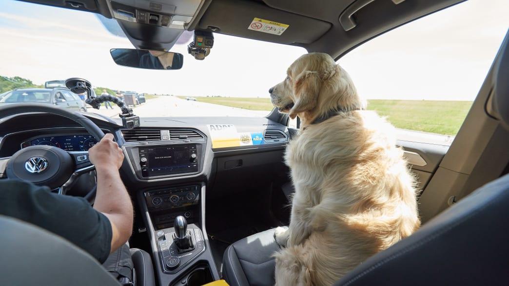 Ein Hund fährt im Auto auf dem Beifahrersitz mit ungesichert