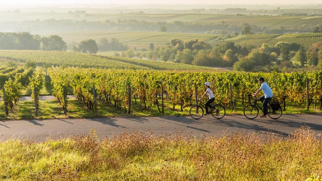 Der Radweg Deutsche Weinstraße führt inmitten der Weinberge durch herrliche Landschaften