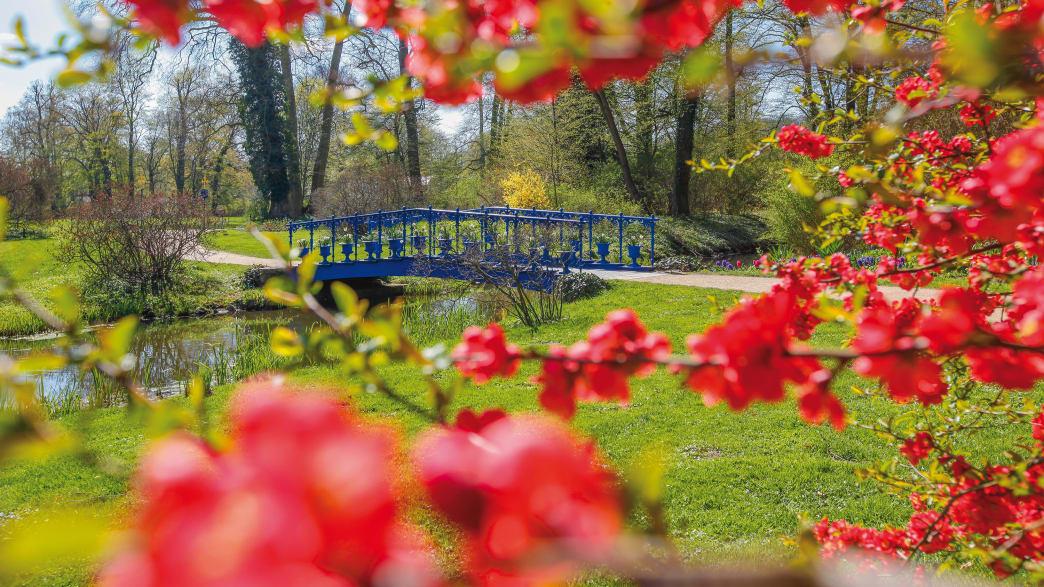 Fuchsienbrücke im Muskauer Park