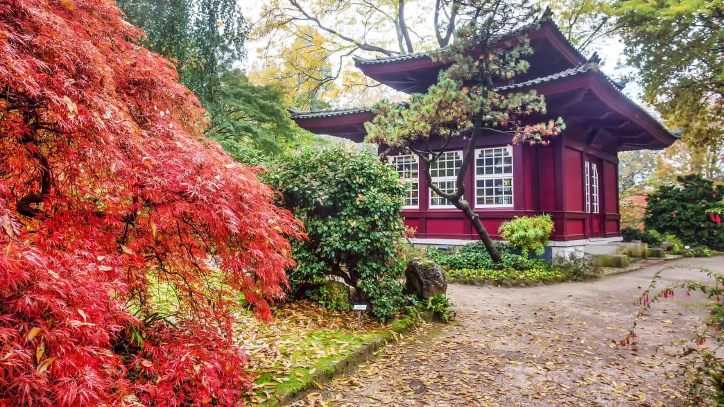 Teehaus im Japanischen Garten in Leverkusen