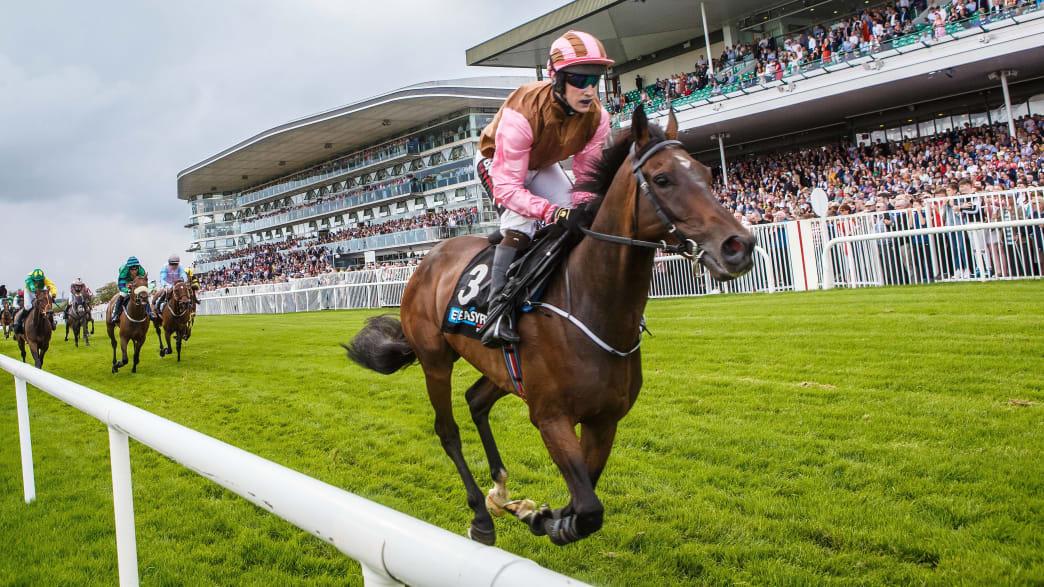 Pferderennen in der Kulturhauptstadt Galway