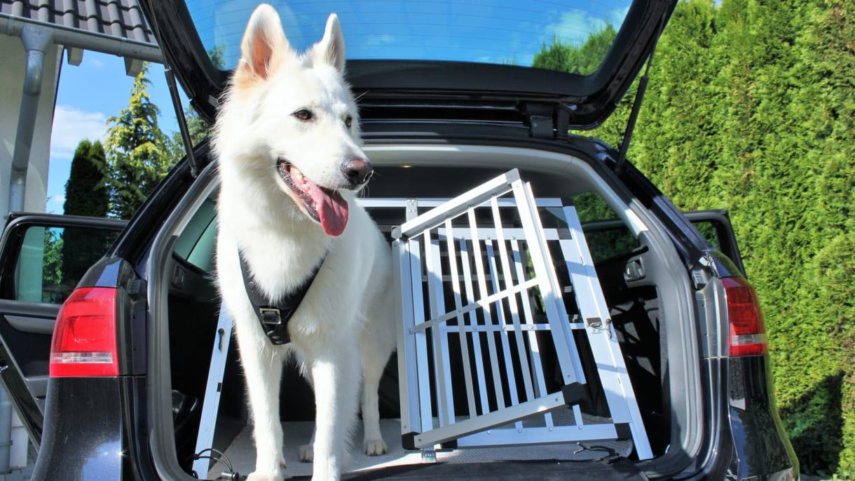 Ein Hund wird im Auto transportiert