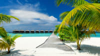 Strand mit Palmen und Meer