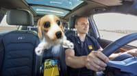 Testleiter Bernd Ulmann bei der Testfahrt Tiersicherung im Auto