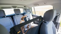 Tierdummy in Backseat Barriere auf Rückbank