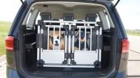 Der ADAC Test Tiersicherung mit Hund im Auto teilweise im Test ungesichert