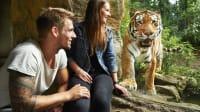 Paar und Tiger Zoom Erlebniswelt Gelsenkirchen
