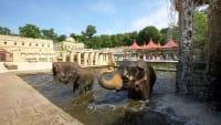 Elefanten im Zoo Hannover