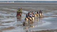 Pferdekutsche und ein paar Reiter durchqueren das Wattenmeer