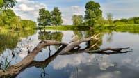 Baumstamm liegt in einem See und spiegelt sich