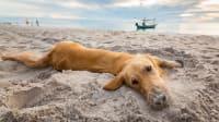 glücklicher Hund am Strand