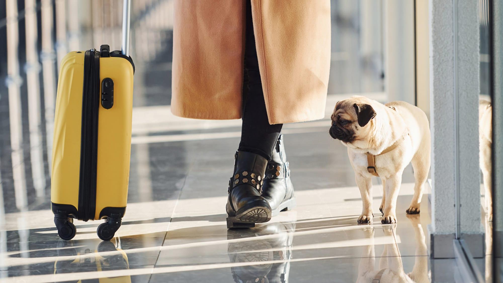 Frau mit Mops am Flughafen