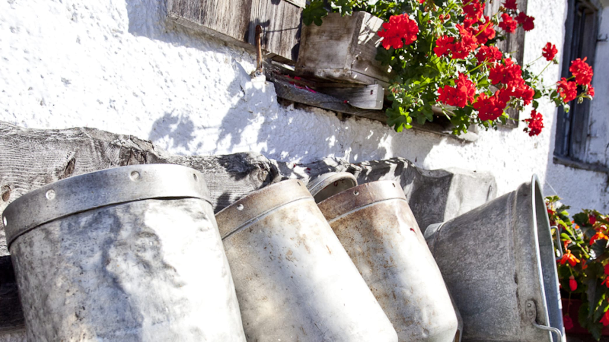 Milchkannen stehen auf einer Bank zum Trocknen