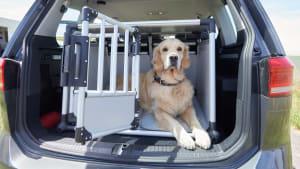 Ein Hund sitzt in einem gesicherten Käfig  im Kofferraum kurz vor dem Schliessen des Käfigs