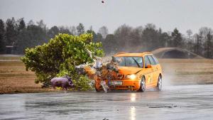 Wildunfall Crashtest