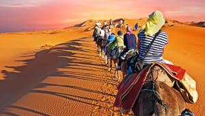 Ein Kamelritt durch die wüste Marokkos