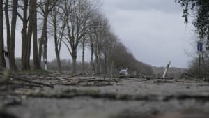 Eine verwüstete Strasse nach einem Sturm nahe Köln
