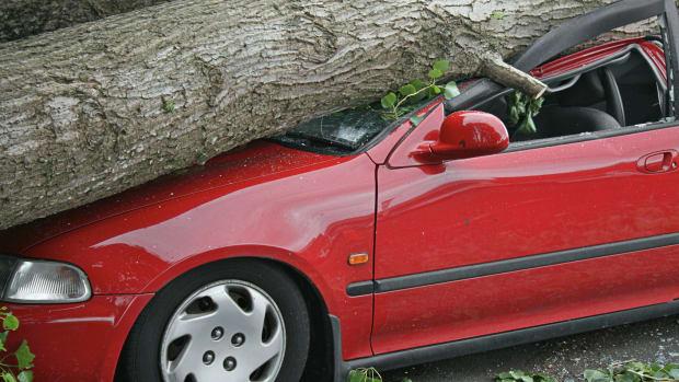 Baum auf Auto gestürzt