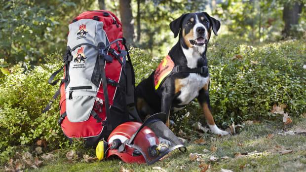 Entdeckertour Rettungshunde