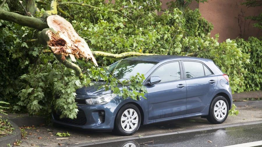 Baum ist auf Auto gefallen